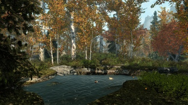 A pieceful pond in the autumn forrest