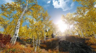 Fall Forest 2