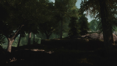 and last shady forest