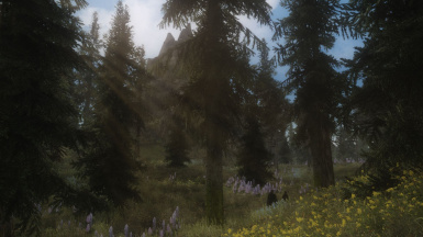 Forrest of Falskaar