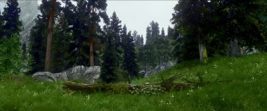 Overcast Forest