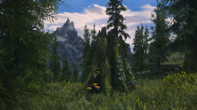 Maybe My ENB Is Ready
