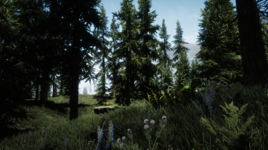 TK Enb Nature