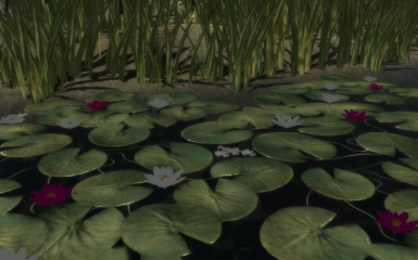 Lily Pad Flowers Snap Shot