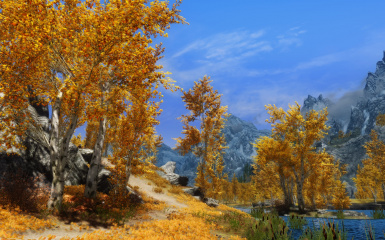 Yellow autumn leaves under blue skies