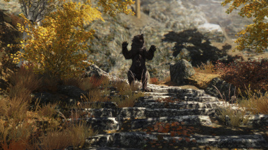 Bear in Autumn