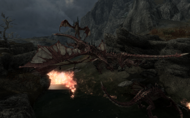 Who said that dragons were big solitary   not me