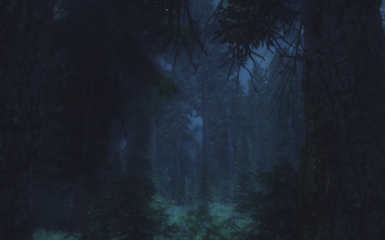Wandering in nature and forest - set 4