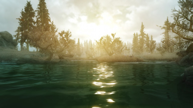 Morning in the swamps