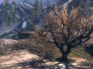 The White Tree of Sovengarde