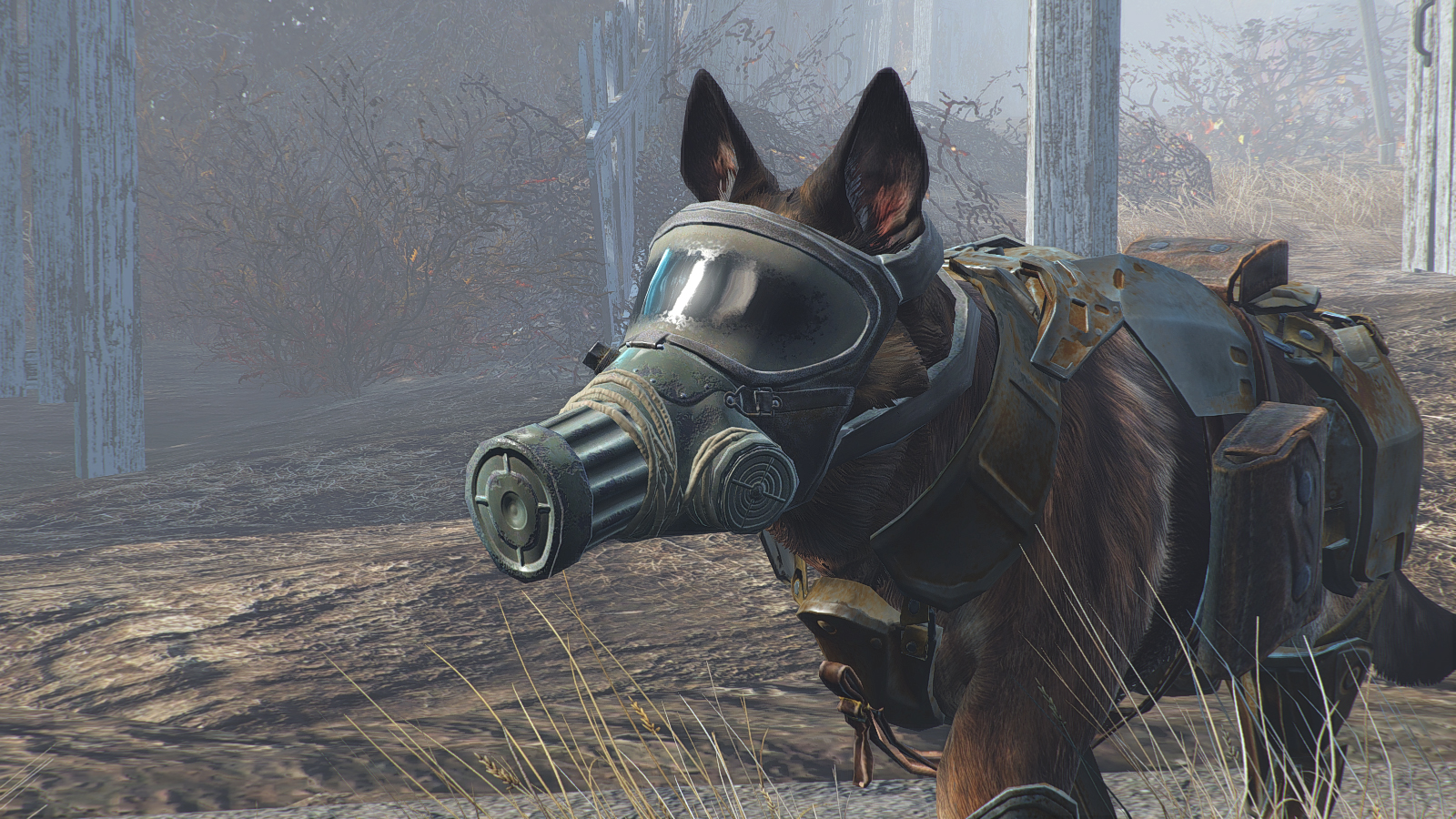 Dog With Cat Mask