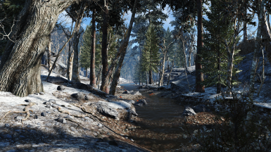 Another Pine Forest Winter