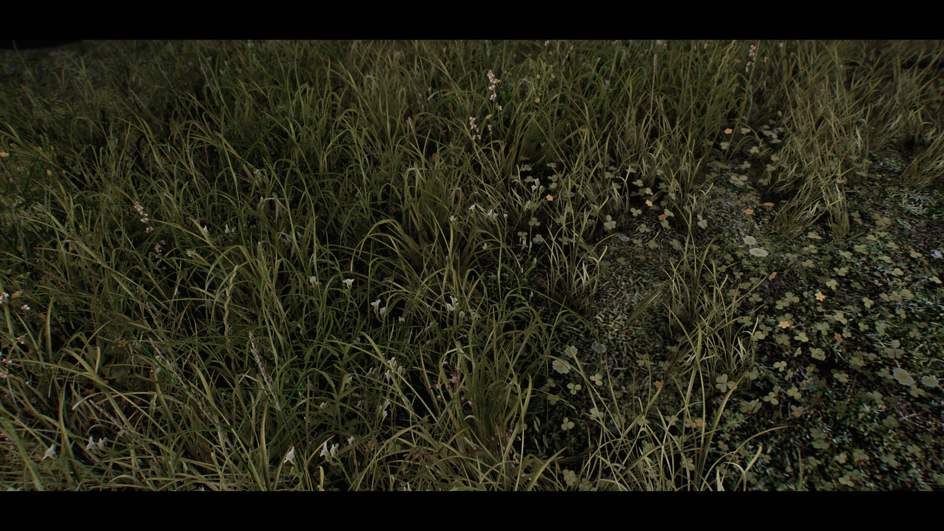 Veydosebrom Upcoming New Forest Grass at Skyrim Special Edition