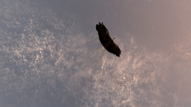 Fly like an Eagle into the night