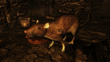 giant rats update