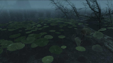 Lilly pads in the lake just north of Falkreath