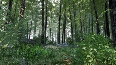 Realistic forest
