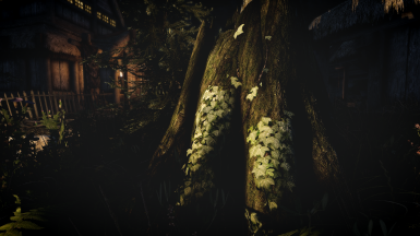 Night detail with Apex ENB
