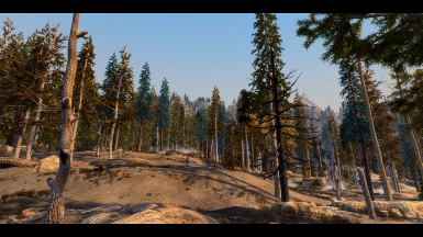 Fantasy Forest Overhaul for Skyrim 3D Trees Project Coloured Trees Test 1