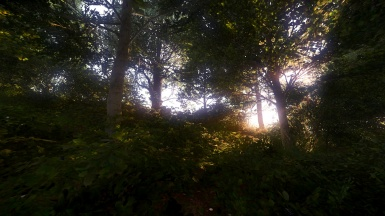 Sunlight Breaking Through The Trees
