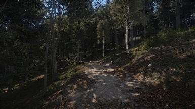 Natural Project - Forest