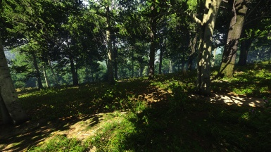 Forest in daylight