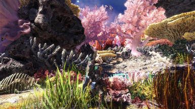 Coral Highlands scenery