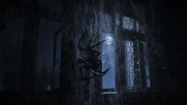 Black spider at the calm night