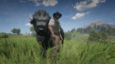 This Bison is well protected