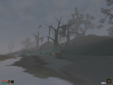 A foggy morning on Better Island