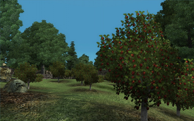 Chorrol Apple Orchard