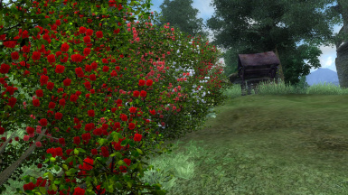 Ver 2  new rose bushes