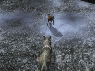 Wolf Form