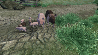 Hamlet and Curlet with piglets