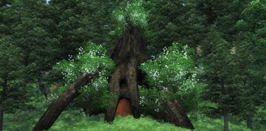 Grove of the Druids