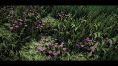 grasses of middle earth