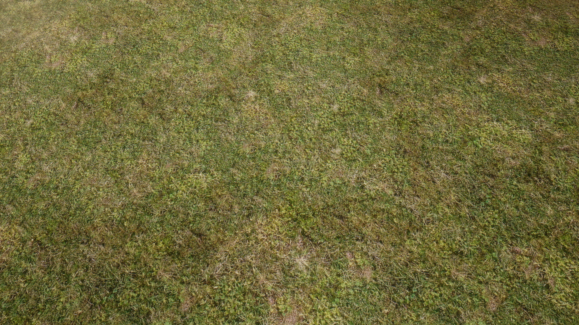 Natural grass texture floor at skyrim nexus mods and for Natural grasses for landscaping