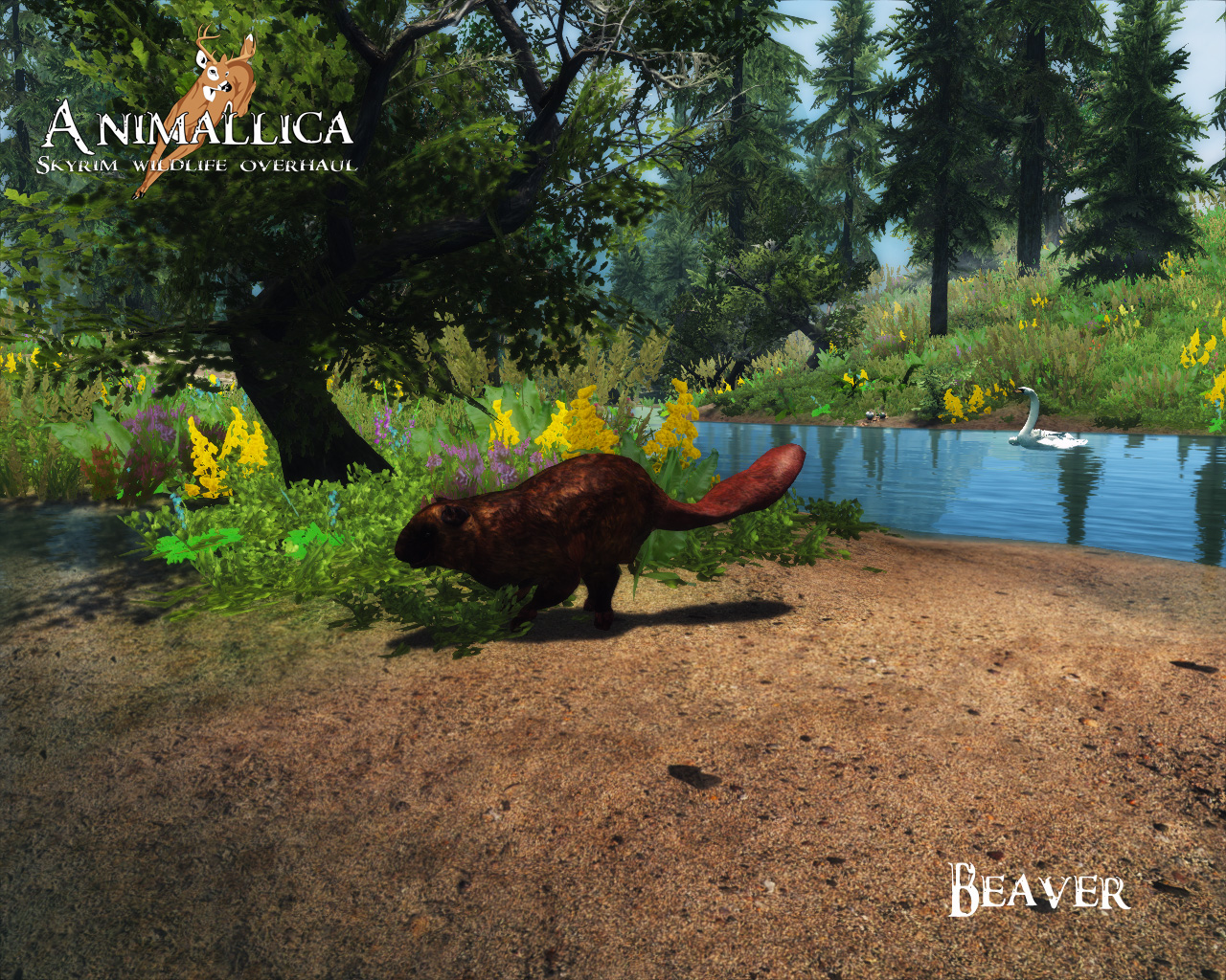 animallica lore discussion and mod announcement skyrimmods