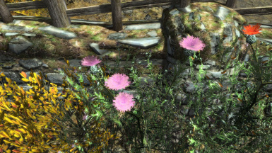 Terrible Thistles LE