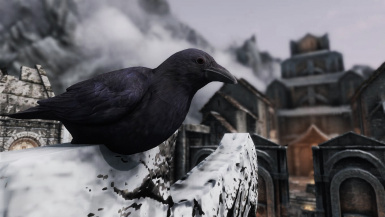 Crows- Mihail Monsters and Animals (mihail oldrim mod)