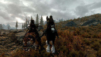 Big cats and followers and horses for followers seem compatible