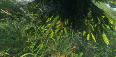 pine and grass