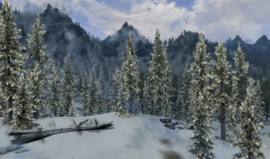Snowy Pines in v172