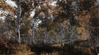 fall forest in 1dot5a