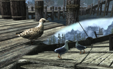 New seagull textures