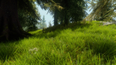 Green Grass for ENB