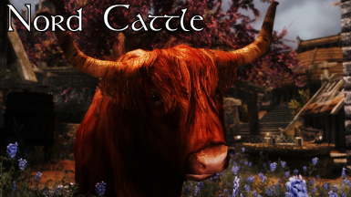 Nord Cattle - HD cows