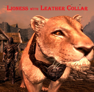 Lioness with leather collar