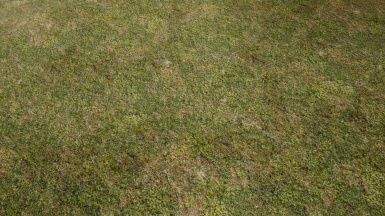 Natural Grass Texture Floor
