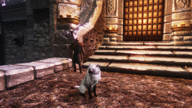 Dog from Windhelm